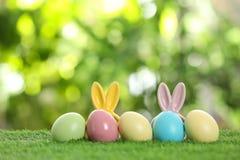 Farbujący królików ucho na zielonej trawie przeciw zamazanemu tłu i zdjęcie royalty free