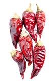 Farbujący chili pieprze na białym tle Obrazy Stock