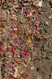 Farbujący kolorowi kwiaty na ziemi ziemi obrazy stock
