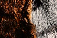 Farbujący owłoseni żakiety w brązie i siwieją kolor, zamykają up zdjęcia royalty free