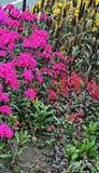 Farbvibrierende Blumen lizenzfreies stockfoto