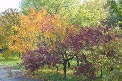 Farby jesień Obraz Royalty Free