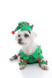 Farceur ou Noël Elf d'animal familier Photos libres de droits