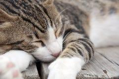 Fare un pisolino del gatto Fotografie Stock Libere da Diritti