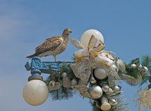 Farewell christmas  bird. Royalty Free Stock Photos