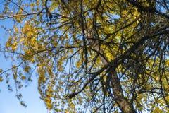 Farfalhando as folhas imagem de stock