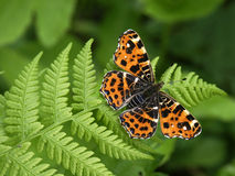 Farfalla #01 Immagini Stock Libere da Diritti