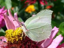 Farfalla #02 Fotografia Stock