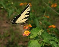 Farfalla 2 Fotografia Stock Libera da Diritti