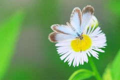 Farfalla 2 Immagini Stock Libere da Diritti