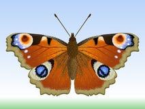 Farfalla. royalty illustrazione gratis