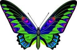 Farfalla illustrazione vettoriale