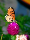 Farfalla 3 Immagini Stock Libere da Diritti
