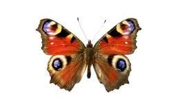 Farfalla Fotografia Stock