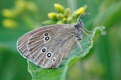Farfalla 1 Fotografia Stock Libera da Diritti