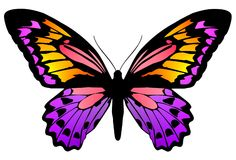 Farfalla 6 Fotografie Stock Libere da Diritti