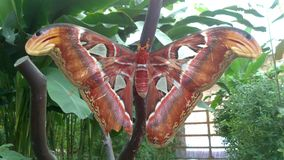 Farfalla Fotografia Stock Libera da Diritti
