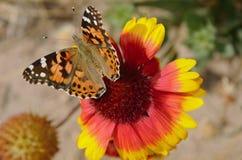 Farfalla 3 Immagine Stock