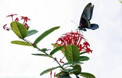 Farfalla, Immagine Stock