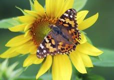 Farfalla 9 Fotografia Stock Libera da Diritti