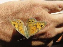Farfalla fotos de archivo