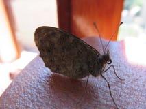 Farfalla foto de archivo