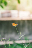 Farfalla alta chiusa sul fiore Immagine Stock