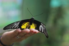 Farfalla amichevole Immagini Stock Libere da Diritti