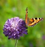 Farfalla & fiore Immagini Stock
