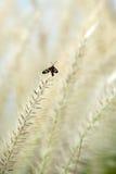 Farfalla appollaiata su un fiore Fotografia Stock Libera da Diritti