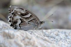 Farfalla appollaiata sulla pietra bianca immagini stock libere da diritti