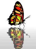 Farfalla a apring Fotografie Stock