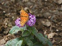 Farfalla arancio con i punti neri Immagini Stock