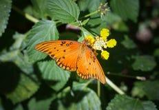 Farfalla arancio su un fiore fotografia stock