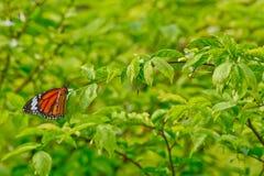 Farfalla arancio sulle foglie verdi immagini stock