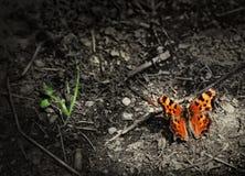 Farfalla arancione Fotografia Stock