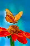 Farfalla arancione Fotografie Stock Libere da Diritti