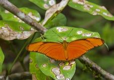 Farfalla arancione di Julia Fotografie Stock