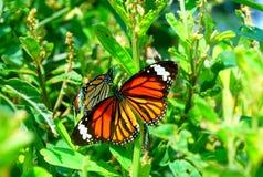 Farfalla arancione luminosa fotografia stock libera da diritti