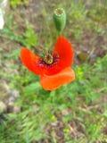 Farfalla ardente immagini stock libere da diritti