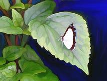 Farfalla astratta Fotografia Stock