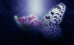 Farfalla astratta sul fiore Fotografia Stock