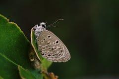 Farfalla; bello insetto immagine stock libera da diritti