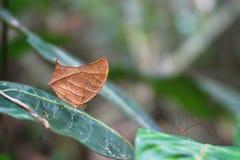 Farfalla bene travestita fotografia stock