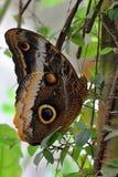 Farfalla bianca di Brown nel legno Fotografia Stock Libera da Diritti
