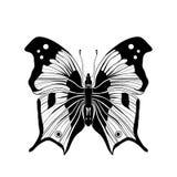 Farfalla in bianco e nero su fondo bianco Fotografia Stock Libera da Diritti