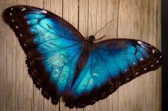 Farfalla blu Immagini Stock Libere da Diritti