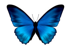 Farfalla blu del velluto Immagine Stock Libera da Diritti