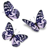 Farfalla blu e bianca Fotografia Stock Libera da Diritti