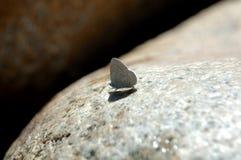 Farfalla californiana Immagini Stock